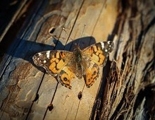 5f2e7330_butterfly.jpg