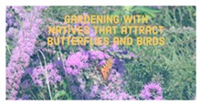 5b23eb3a_gardening_with_natives_that_attract_butterflies_and_birds.jpg