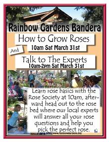951dcfb6_rose_society_how_to_grow_roses_bandera_2018.jpg