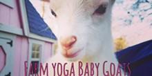 farm_yoga.jpg