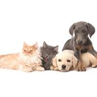Upcoming San Antonio Pet Adoption Events