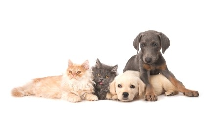 puppies-and-kittiesjpg