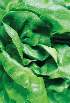 Urban Homestead: Salad Greens