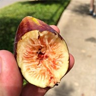 What I Ate: Figs, ice cream and a visit to Mariscos El Bucanero