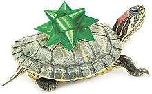 yir_turtle_cmykjpg
