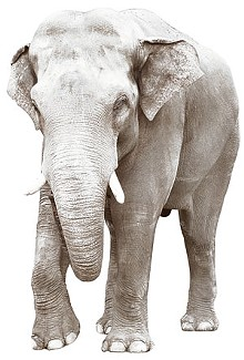 yir_elephant_cmykjpg