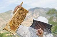 Beekeeper Sam Wimpfheimer