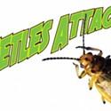 Beetles Attack!