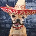 Cinco de Mayo @ Taco Taco