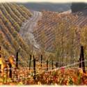 Cline Cellars Wines