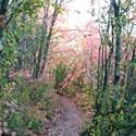 Fall Hikes in Utah's Canyons