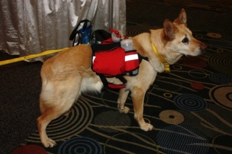 Fria shows a pack that well-dressed dogs are wearing this season. - WINA STURGEON