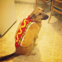 Hot Dog hating life