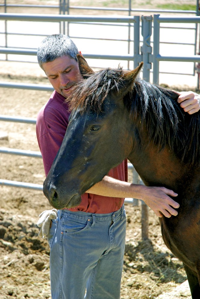 Inmate Adam Wilson gentles a wild horse
