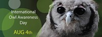 ae2504ad_international-owl-awareness-day.jpg