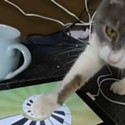 Kitty Plays the Ipad