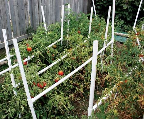 wina_tomatoes.jpg