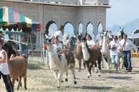 Llama Fest