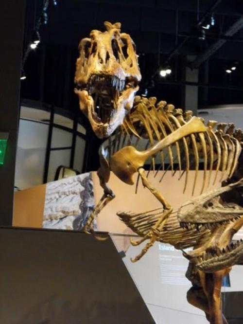 Natural History Museum of Utah - JERRE WROBLE