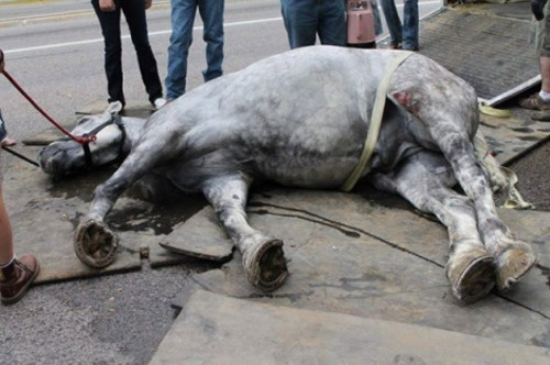 Jerry the carriage horse who collapsed on a downtown Salt Lake City street in August 2013