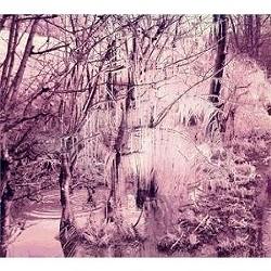 violetcries.jpg