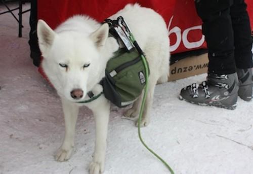 outdoor_retailler_dogs_010.jpg