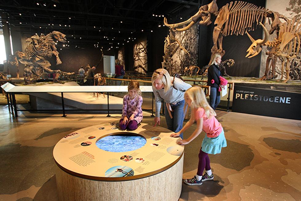 Natural History Museum - TOM SMART