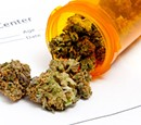 Medical Marijuana Movement Swells