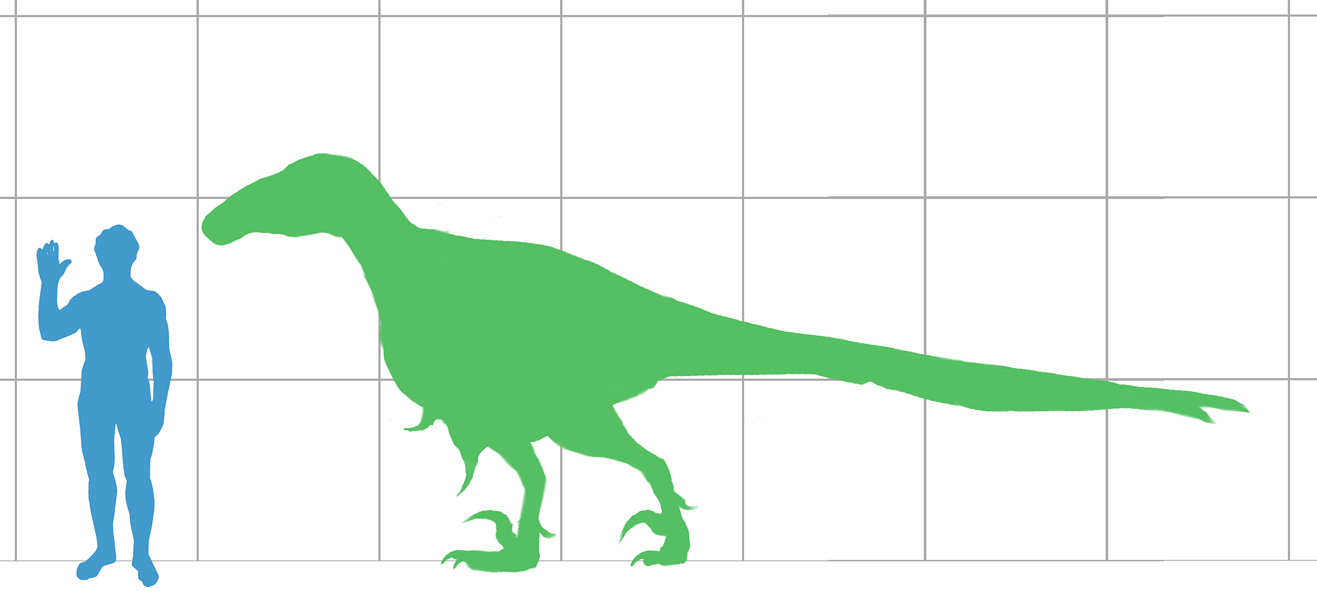 Why was this such a big issue? I mean, look at the size of the largest known Utahraptor, compared with a meager human. - VIA WIKIMEDIA COMMONS