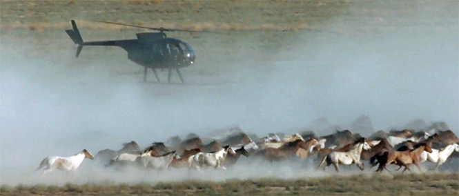A production still from the upcoming documentary Wild Beauty shows a helicopter rounding up Utah's Onaqui wild-horse herd. - WILDBEAUTYFOUNDATION