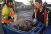 Ashley Bailey, left, and Kellie Ulrich inspect recycling bins in the Glendale neighborhood for misplaced items.