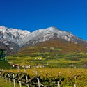 Wine Wednesday: A Summer Sipper from Alto Adige