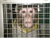 Animal Testing Death at U Sparks Federal Warning