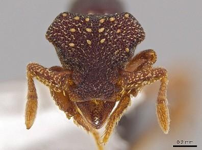 ants_2.jpg