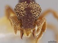 "University of Utah Prof. Discovers ""Terrifying"" Predator Ants"