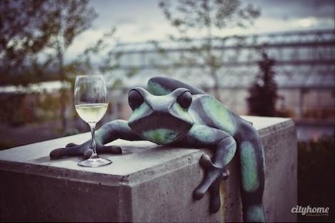 frog-bench-farms-3.jpg