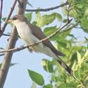 Birding on the Jordan River