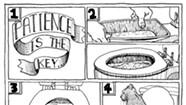 A Feline Toilet-Training Tutorial