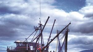 A New Film Features Vermont's Salmon Catchers Starbird Fish