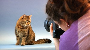 A Photographer Duo Helps Animals Find Homes [295]