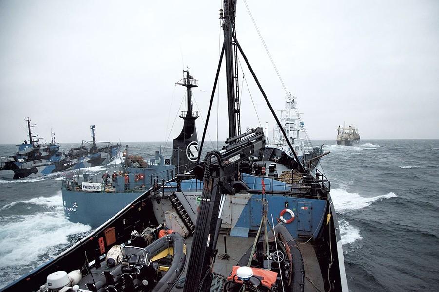 A Sea Shepherd vessel, Steve Irwin, nearly collides  with the Yushin Maru - COURTESY OF SEA SHEPHERD CONSERVATION SOCIETY