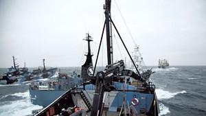 A Sea Shepherd vessel, Steve Irwin, nearly collides  with the Yushin Maru
