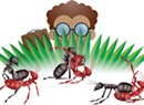 A UVM Study Considers the Sex Life of Ants