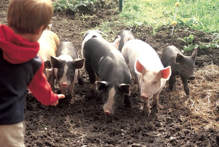 PHOTOS COURTESY OF AGRICOLA FARM