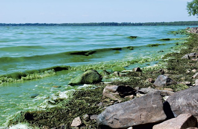 Algae-green waves roll upon the shore in Missisquoi Bay - COURTESY OF KATHRYN FLAGG