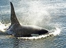 Controversial Orca Film Makes Waves at Revolution Oscar Party