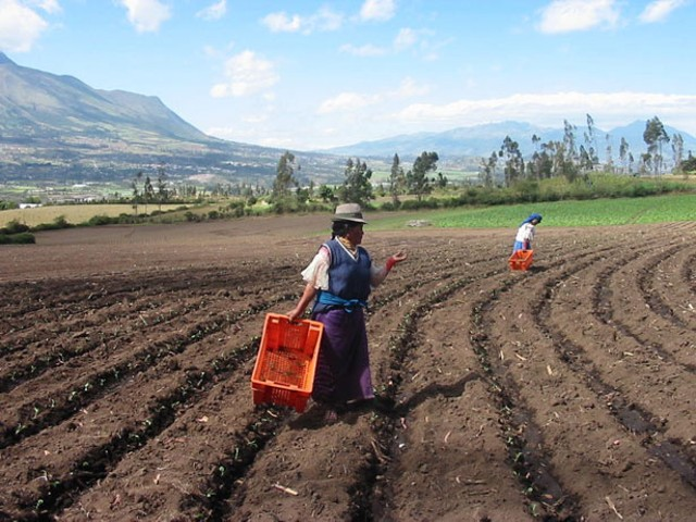 """ARD's """"Ecuador Pro Norte"""" project increases income and employment for small- and medium-scale farmers"""