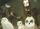Birds of Vermont Museum