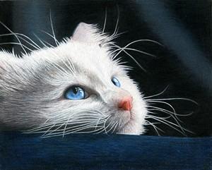 "COURTESY OF CORRINA THURSTON - ""Blue-Eyed Kit"" by Corrina Thurston"