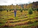 An Essex Christmas Tree Farm Battles Flood Damage